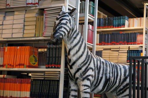 Our textbook zebra.