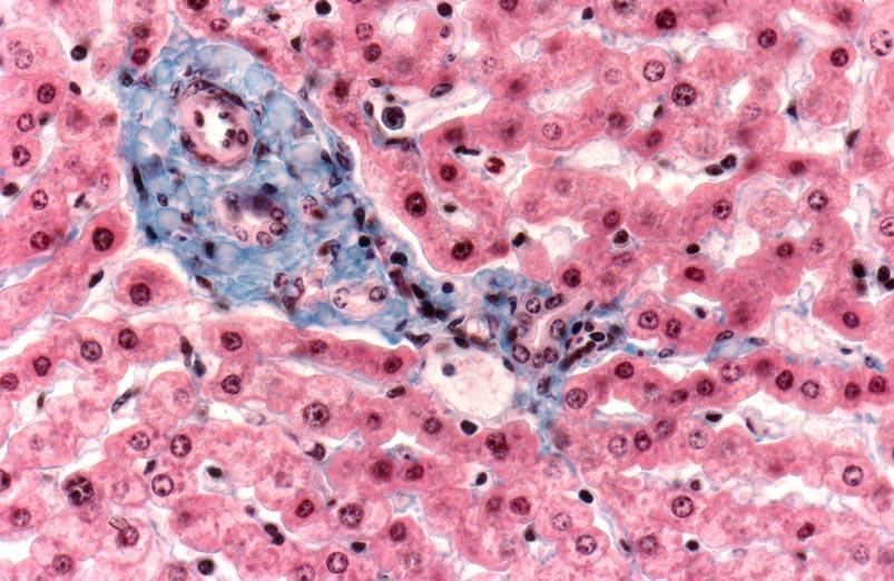 Übungen SoSe 2006 • Institut für Veterinär-Anatomie • Fachbereich ...