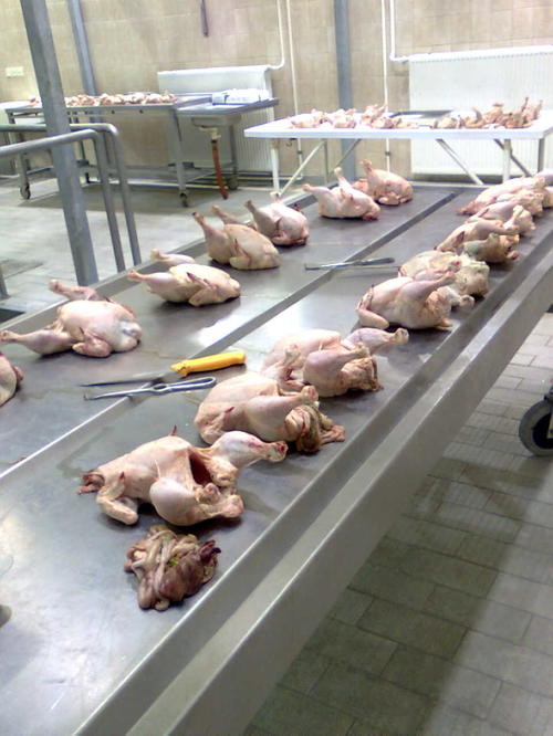Analyses of Poultry Production